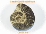 Ammonite pièce de 339gr