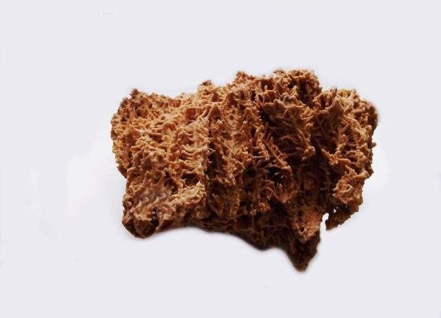 Rochers calcaire coraliens